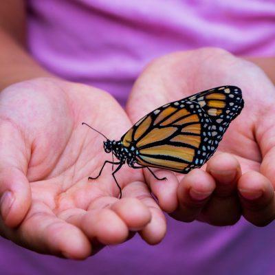 mãos com borboleta pousada animal a receber reiki. Rosa Teate